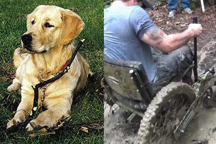 Amazing Service Dog