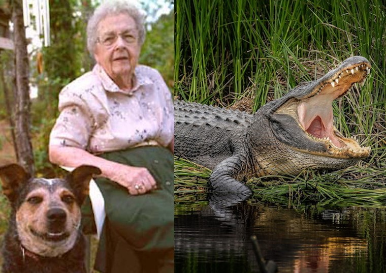 Alligator Rescue